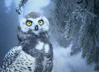 owl-3184032_640