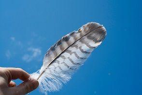 relleno-nórdico-plumón