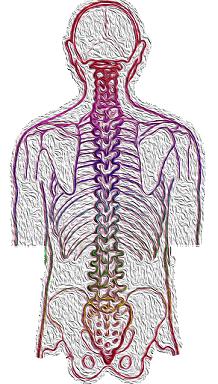 alineacion cabeza-cuello-espalda